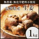 【無農薬】生姜1kg【しょうが】【ショウガ】【デザイナーフーズ】【料理】【長崎県産】