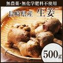 【無農薬】生姜500g【しょうが】【ショウガ】【デザイナーフーズ】【料理】【長崎県産】