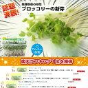 ブロッコリーの新芽(ブロッコリースプラウト) 12パック入