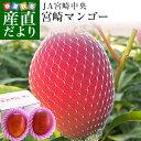 送料無料 宮崎県より産地直送 JA宮崎中央 宮崎産完熟マンゴー 大玉2L×2玉 700g以上 (350gから459g×2玉) マンゴー まんごー