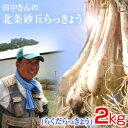 鳥取県産 特別栽培 田中さんの北条砂丘らっきょう2kg(根付き土付き らくだらっきょう) 送料無料