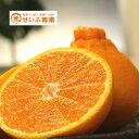 【 訳あり】【愛媛県産】 不知火(デコみかん)約10kg 送料無料