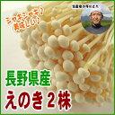 【シャキシャキ新鮮】長野県産えのき2株