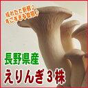 【産地直送!!】すごすぎる食感!長野県産えりんぎ3株