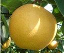 味、形ともりんご!甘さ一番稀少新品種中国山地の寒暖差が甘さの決め手除草剤不使用 減農薬栽培 樹上完熟白竜湖の梨・新星 5kg(10〜12個)【発送 9月中旬〜10月中旬】