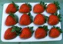デザート!ケーキに!宝石の輝き、霞ヶ浦の香り高い甘味と酸味の絶妙なバランス、有機肥料栽培いちご・やよいひめ 12個入り2パック【発送時期:12月上旬頃〜4月下旬頃】(特別なパッケージで大切にお届けします)05P07Feb16