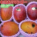 送料無料 沖縄産 わけありマンゴー約5kg(約12〜16個)※産地直送です 【ご贈答品には不向きです】 【発送期間:7月上旬〜8月下旬頃】