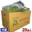 【送料無料】静岡県産 チマ・サンチュ Lサイズ 20袋入 1箱(約2kg)