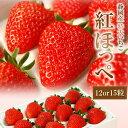 まもなく終了!静岡産紅ほっぺいちご特大サイズ(12or15粒入)