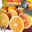 みかん 訳あり ☆あす楽対応☆ 清見 オレンジ タンゴール 2.5kg 送料無料 和歌山産 柑橘 果物 フルーツ 蜜柑 みかん タンゴール 訳あり きよみ ※サイズ混合です (約10玉〜17玉)