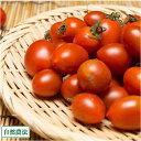 ミニトマト 3kg 自然農法 (沖縄県 大宜味農場) 産地直送