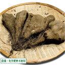 短形自然薯(土付き) 3kg 農薬不使用 (青森県 須藤農園) 産地直送
