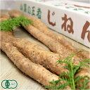 [特別セール]自然薯 家庭用 約1.2kg(1〜5本) 有機JAS (熊本県 那須自然農園) 産地直送