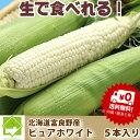 【7月発送】北海道富良野産 激甘トウモロコシ ピュアホワイト 5本【送料無料】【10P03Dec16】