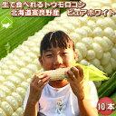 とうもろこし 北海道富良野産 生で食べれるトウモロコシ ピュアホワイト 10本 Mから2Lサイズ混み 送料無料 別途送料が発生する地域あり