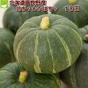 かぼちゃ パンプキン 北海道富良野産 訳あり 坊ちゃんかぼちゃ(ぼっちゃんカボチャ) 10玉【10P03Dec16】