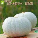 ハロウィン かぼちゃ 送料無料 北海道富良野産 白い南瓜(かぼちゃ) 雪化粧(ゆきげしょう) 訳あり(わけあり) 5キロ(2玉から3玉入り)「送料無料」  【10P03Dec16】