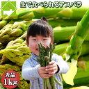 アスパラガス 予約販売 北海道 富良野産 送料無料 グリーン スイートアスパラ 秀品 1kg S〜Lサイズ込【生】で食べられる