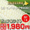 北海道富良野産 白い とうもろこし 訳あり(わけあり)ピュアホワイト 5本入 【送料無料】 【業務用】 【訳まち】【ワケ待ち】【RCP】【10P03Dec16】