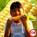 生で食べるとうもろこし 北海道富良野産 フルーツ トウモロコシ 恵味 2Lサイズ10本入り 送料無料
