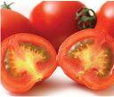 北海道富良野産 フルーツトマト(S-L込) 1kg 【送料無料】 【10P03Dec16】