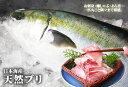 送料無料【スピード出荷】【日本海産】天然ブリ[生] 1匹(3kg前後)【お刺身♪ブリ大根♪】