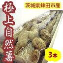 自然薯(じねんじょ)3本入約2.4kg 茨城県鉾田市産
