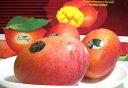 台湾産 アップルマンゴー 大玉 12〜14個入り【たいわん アップルマンゴー MANGO】