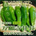 万願寺とうがらし(まんがんじとうがらし) 約1kg(32〜40本前後) 京都産 「京野菜」 甘くて柔らかく、しかも大きい!種も少ないたべやすい 万願寺唐辛子 です。「京の伝統野菜」 甘長