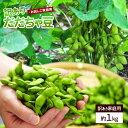 送料無料 訳ありだだちゃ豆 1kg ご家庭用 ※枝豆、えだまめ、エダマメ、豆、まめ、マメ、産地直送