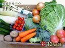 送料無料【愛媛産、四国・九州産野菜】お好み・お任せ♪季節の野菜セット12品以上