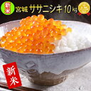 ■新米■令和2年産 宮城県産 ササニシキ 10kg 玄米,5分,7分,精白米(精米時重量約1割減)【米】【hu】