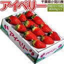 いちご イチゴ 苺 千葉県産 アイベリー 12〜15粒 約500g イチゴ 苺 果物 フルーツ 国産 ギフト 贈り物 プレゼント 贈答 お取り寄せ お礼 お返し 冷蔵