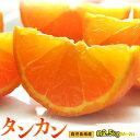 柑橘 みかん たんかん 鹿児島県産 タンカン M〜2Lサイズ 約2.5kg 送料無料
