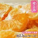 柑橘 みかん 山口県産 せとみ M〜3L 約2.5kg 送料無料