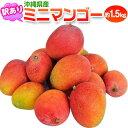 マンゴー 沖縄産 ミニマンゴー 約1.5kg 多少の訳あり品 ※常温または冷蔵
