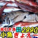 <6月下旬>何が入るか分からない底引き漁小魚ぎょえーっセット魚 詰め合わせ