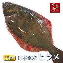 天然ヒラメ 平目 日本海産 1.0〜1.4キロ物