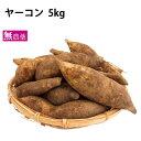 ヤーコン 北海道産 無農薬栽培 5kg