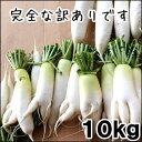 【今から予約10月より発送 】ステビア・米ぬか農法の瑞々しい訳あり大根10kg【千葉県産】