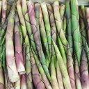 【国産 天然】根曲がり竹1kg 採りたてを産直☆ミシュラン3つ星御用達店!根曲り竹、地竹、ジダケ、姫竹、すすたけ、すすたけ、ひめたけ、たけのこ、タケノコ、竹の子