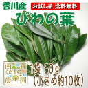 香川産 びわの葉【お試し品・送料無料】(1袋50g 生葉約10枚)♪