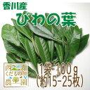 【送料無料】香川産 びわの葉 100g(1袋 生葉15-25枚)♪[国産 無農薬](枇杷葉・びわ生葉)
