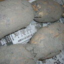 掘りたて泥付き「岩国蓮根(岩国レンコン)」2kg