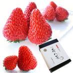 苺八景 いちごはっけい 滋賀県野洲市産 近江 おうみ 特産 紅ほっぺ 2Lサイズ 16粒入り