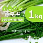 青ネギ ねぎ 農薬90%カット 特別栽培【1kg】