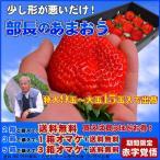 【2箱以上で送料無料】上を狙え!「部長のあまおう特大9から15玉入」特大の苺(いちご)あまおうイチゴ/少し形が悪いだけ