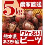 有機栽培 ビーツ 5kg 熊本県産 野菜 栄養 ワケあり 特価 予約販売