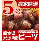 熊本県あさぎり町産 ビーツ 5kg  野菜 栄養