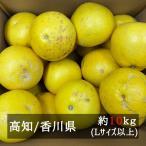 訳あり土佐文旦 サイズおまかせ 約10kg(1kgあたり270円)  高知県産